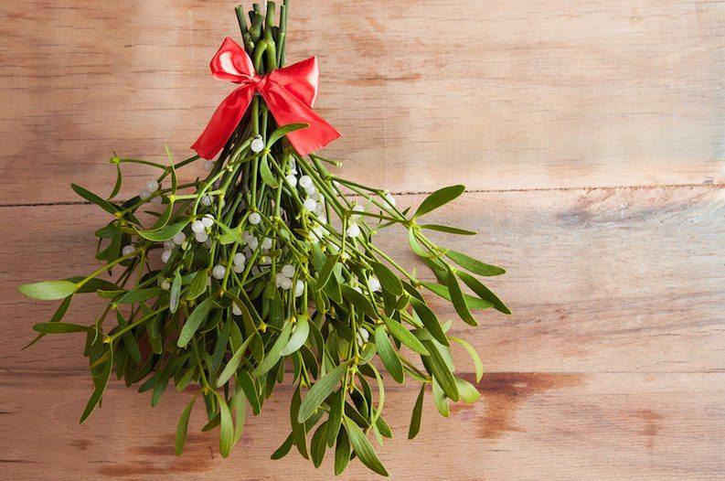 live mistletoe for a decorative pop this holiday season native